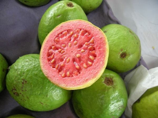 Guava fruits are juicy and the seeds are can resist digestion. Image credit plantvillage.org