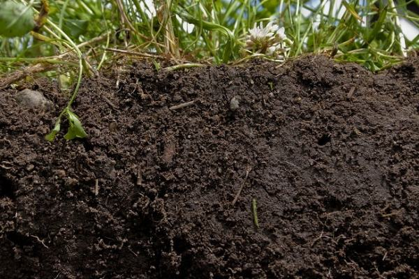 Loam soil. Image credit betterground.org