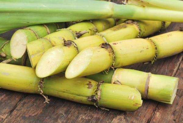 Sugarcane cuttings. Image credit livestrong.com