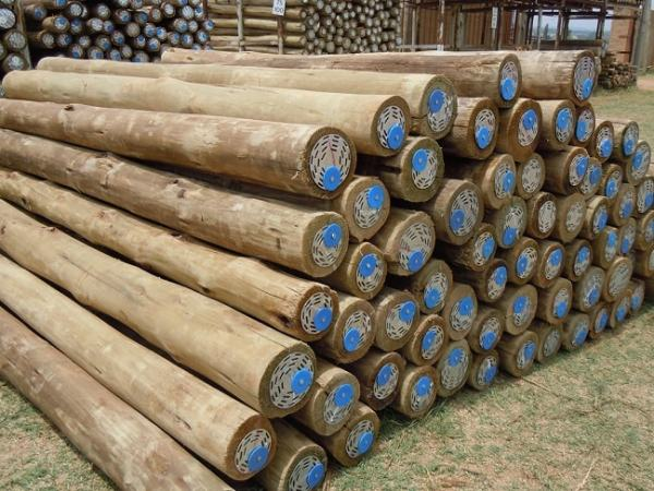 Treated poles. Image credit lynnridgetimbers.co.za
