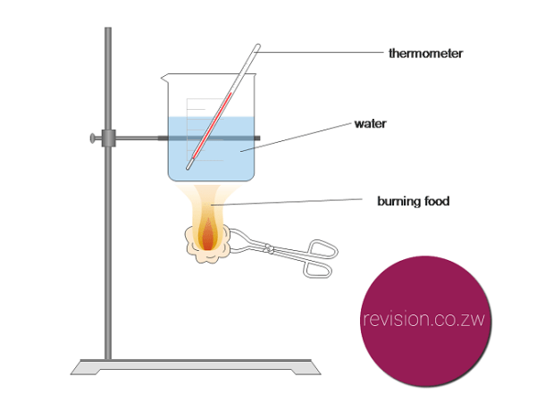 Burning food to to test its energy content