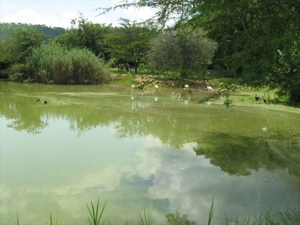 Eutrophication at Lake Chivero. Image credit palmaison.com