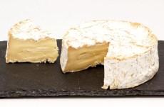 queso camembert en peligro de extinción
