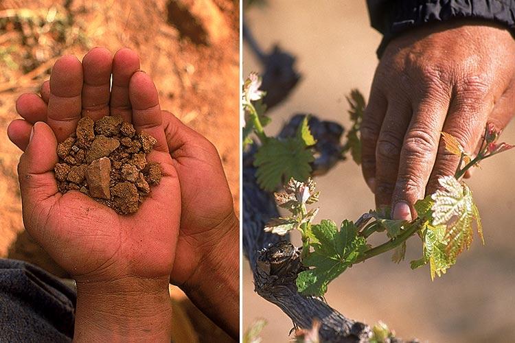 Monte Xanic cumple 30 años de hacer vino en mexico