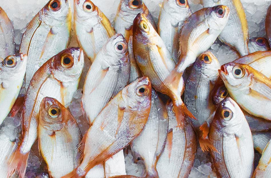 Donde comprar pescado sustentable en CDMX