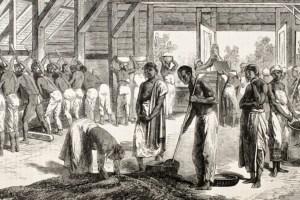 profecía y reforma social