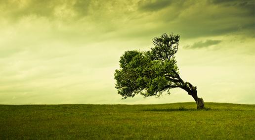 Old-tree1