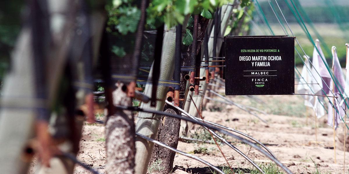 El-lujo-del-propio-vinoport