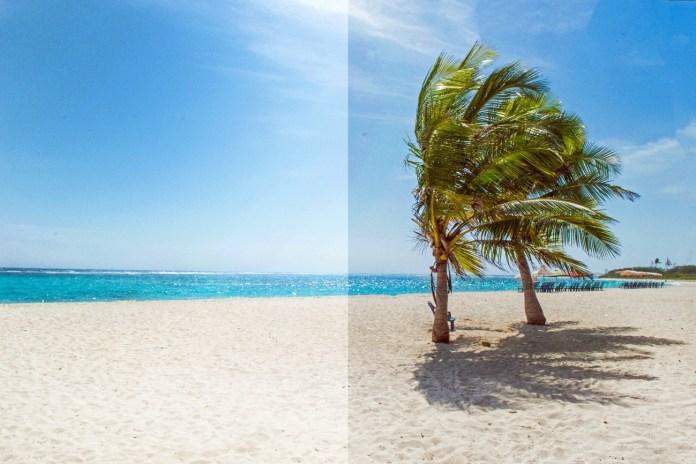Praia com coqueiros  Descrição gerada automaticamente
