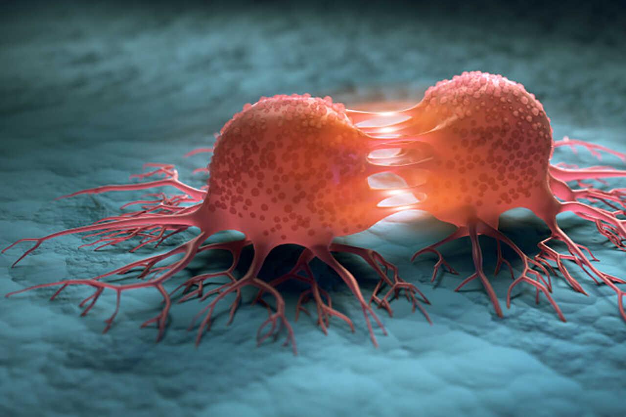 Veninul albinelor poate distruge celulele celei mai grave forme de cancer la sân