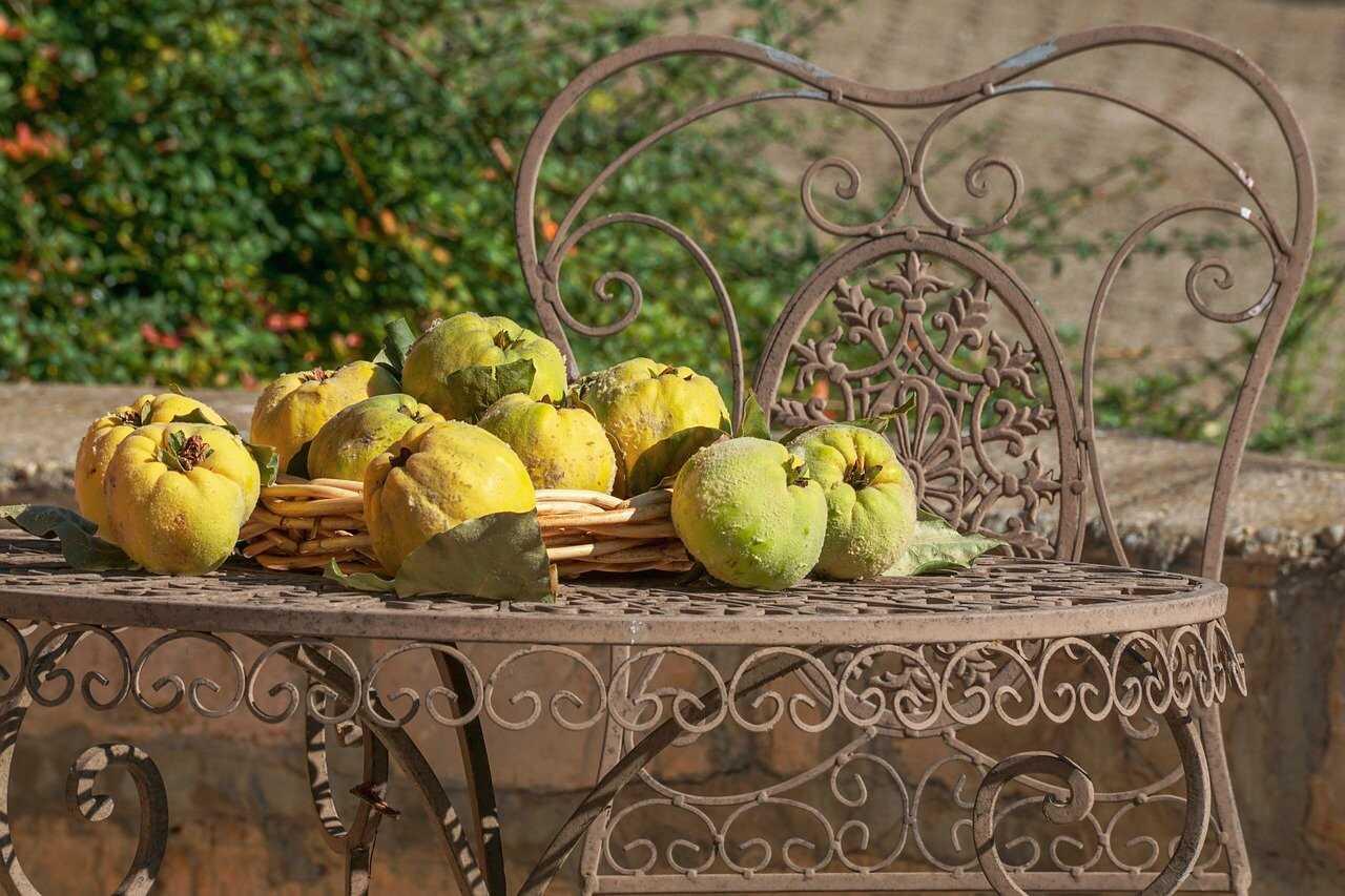 Gutuia, un fruct de toamnă bogat în minerale