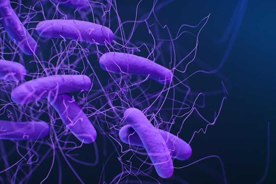 Infecțiile cu Clostridioides difficile tratate cu o drojdie modificată