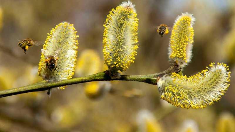 covid-19-polen