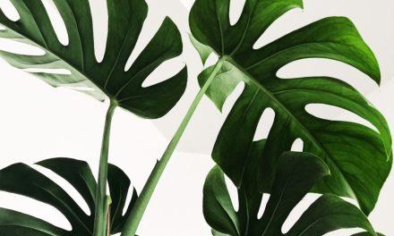 """Todo el mundo debería tener su propio bisturí. """"Aprender a hablar con las plantas"""", de M. Orriols"""