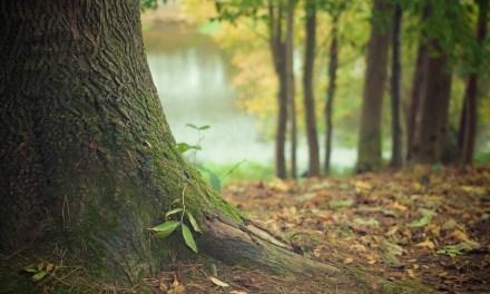 Dos enamorados en el bosque