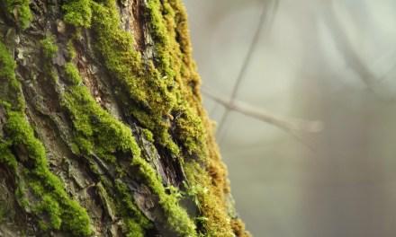 La ventaja de los árboles. «Dicen», de Susana Sánchez Arins