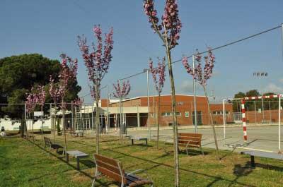 El IES Giola plantó cerezos el año pasado para recordar a los fallecidos