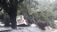 Rio: Com chuva, árvore cai em ônibus na Zona Sul