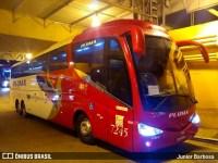 Pluma volta reativar alguns de seus ônibus