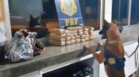 MT: PRF prende mulher com 30kg de droga em bagagem em ônibus