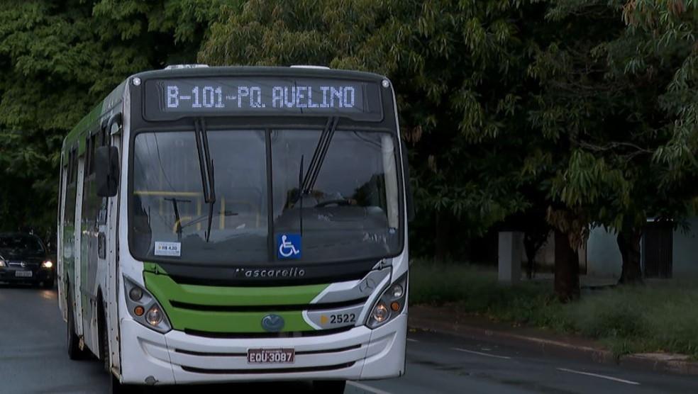 SP: Escorpião pica passageira dentro de ônibus em Ribeirão Preto