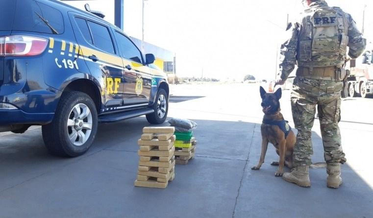 Vídeo: PRF usa cães farejadores e encontram 34.5 Kg de entorpecentes em ônibus no MS