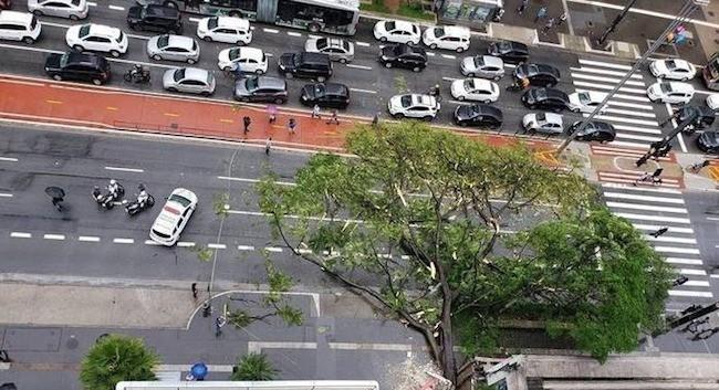 São Paulo: Árvore cai na Avenida Paulista e deixa duas pessoas feridas nesta tarde – Vídeo
