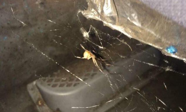 MS: Empresa de ônibus terá que indenizar estudante que viajou com aranhas e baratas a bordo