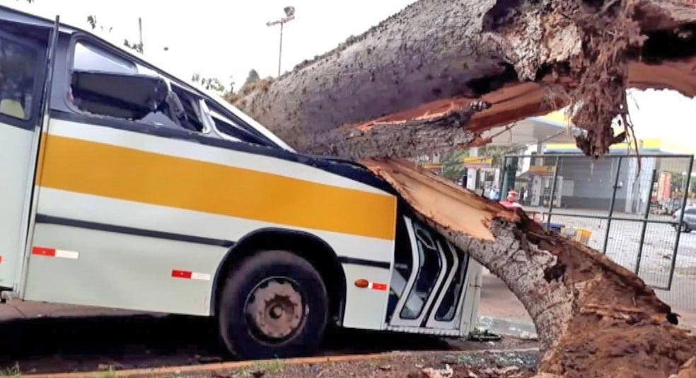 MG: Ônibus escolar acaba atingido por árvore derrubada em Monte Alegre de Minas