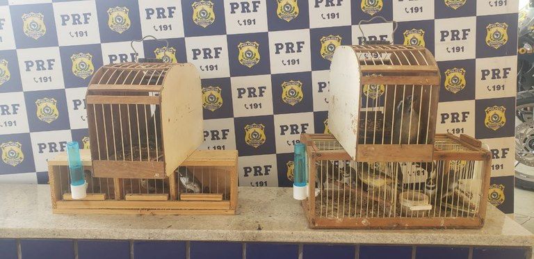BA: PRF resgata 15 aves silvestres transportadas irregularmente em ônibus na BR-116 – Vídeo