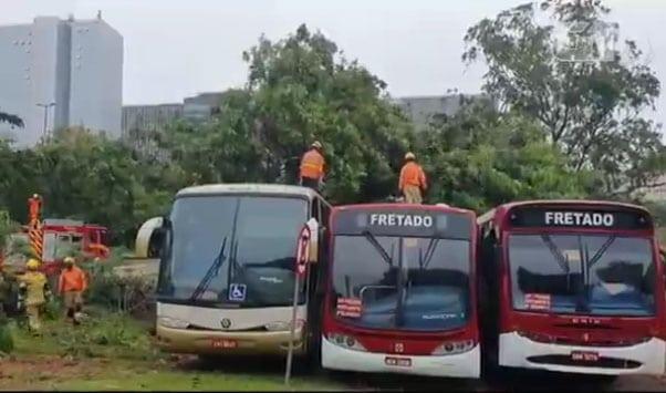 Brasília: Árvore derrubada pelo vento cai sobre três ônibus na L2 Sul ao lado do DNIT