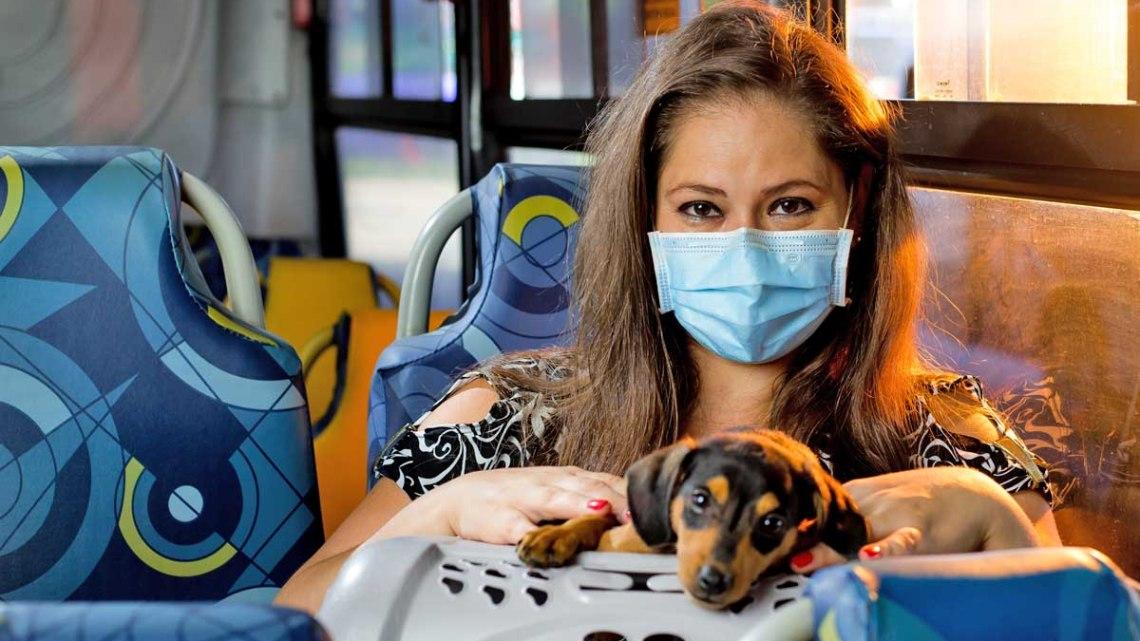 SP: Itapevi autoriza o transporte de animais de estimação em ônibus municipais