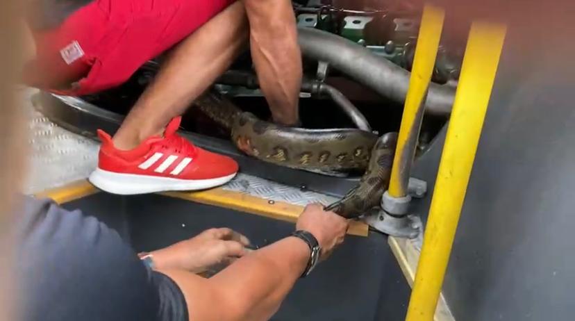 Vídeo: Cobra é encontrada em motor de ônibus da Viação São Pedro, em Manaus