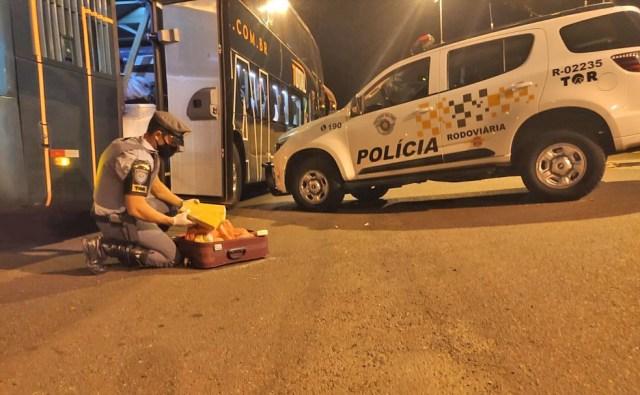 SP: Polícia Rodoviária prende passageiro de ônibus com entorpecente durante fiscalização - revistadoonibus