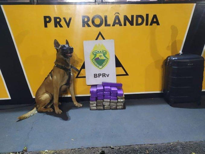 PR: Polícia Militar apreende 20 Kg de entorpecentes com passageira de ônibus em Rolândia
