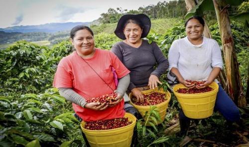 mujeres-cosecha