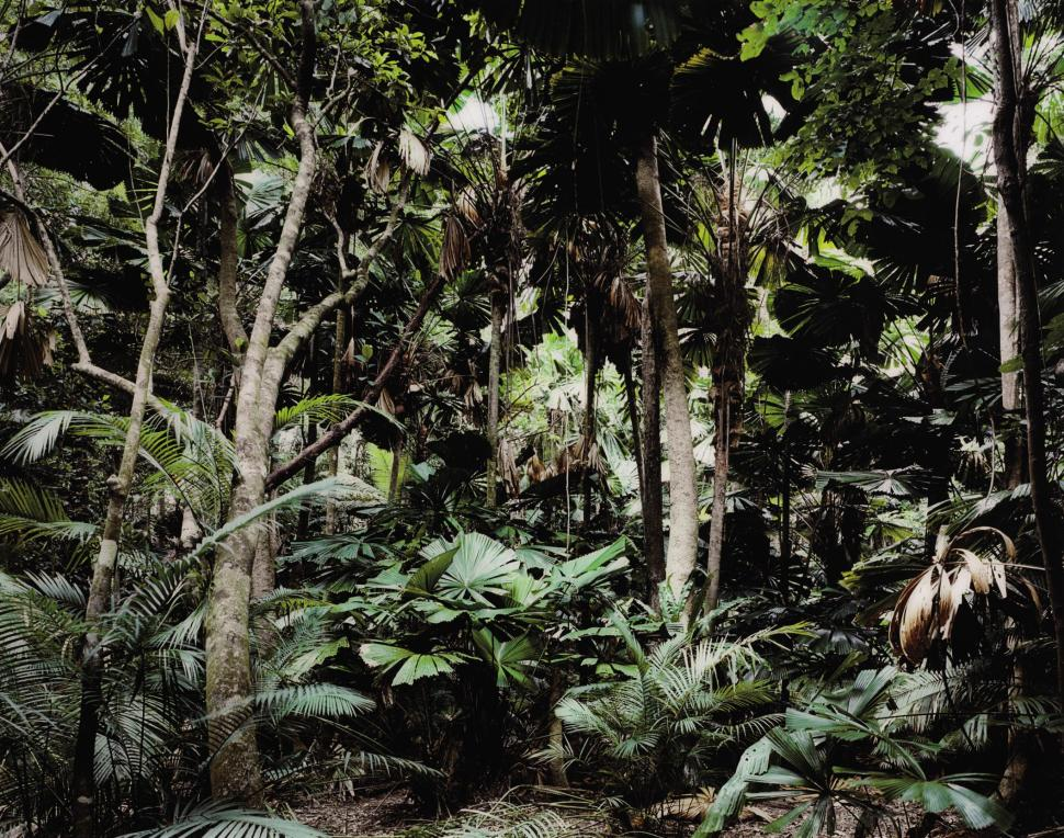 Thomas Struth, Paradise 2 Daintree-Australia, 1998.