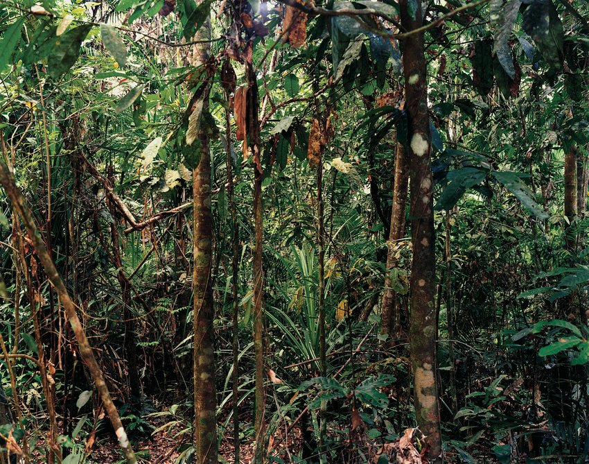 Thomas Struth, Paradise 4 Daintree-Australia, 1998.