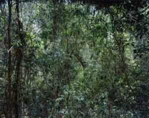 Thomas Struth. Paradise, 1999. China Provinz Yunnan Xi Shuang Banna