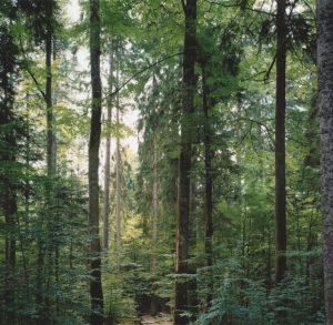 Thomas Struth. Paradise 19 Bayerischer Wald 1999