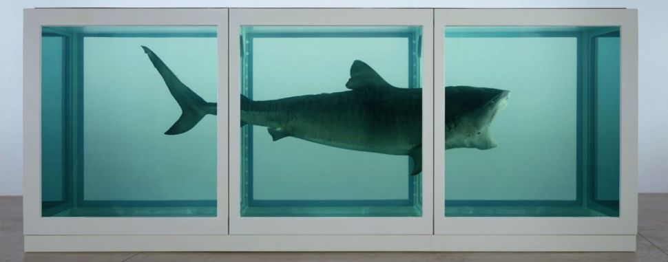 Damien Hirst The Physical Impossibility of Death in the Mind of Someone Living, 1991