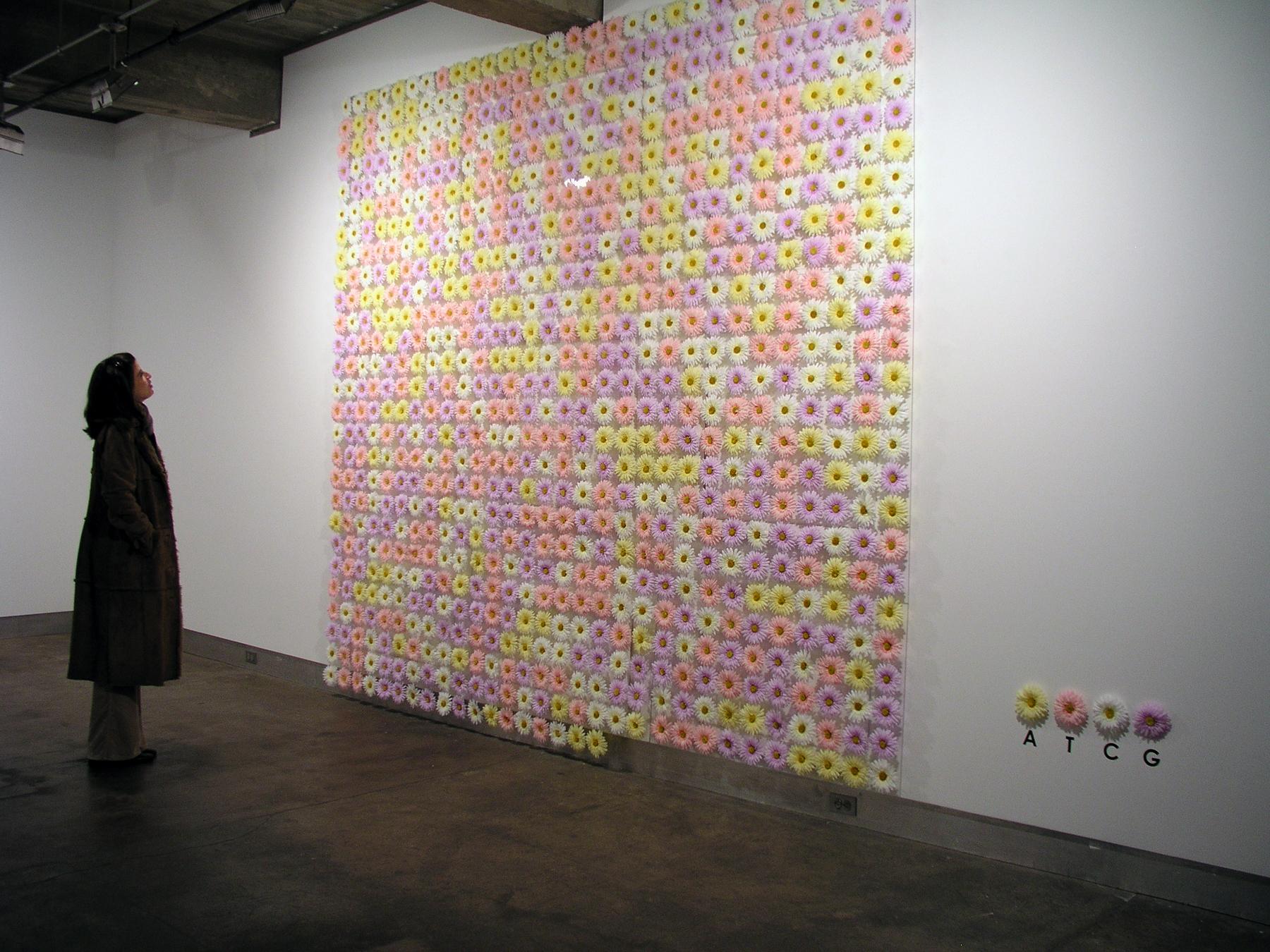 Nela Ochoa. Decoded Daisy Foto Henrique-Faria Gallery. 2004. Nueva York
