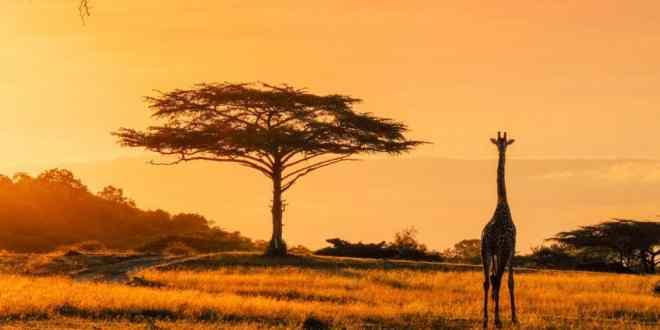 Pymes exportadoras buscan vender más a bloques de países africanos.