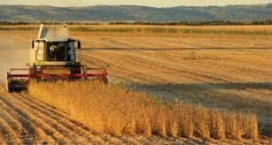 Afirman que la cosecha récord y Brasil serán motores de las exportaciones en 2019.