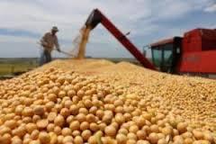 Acopiadores de granos criticaron el Presupuesto 2019 y rechazaron el 33% en derechos de exportación.