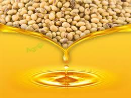 Exportaciones de aceite de soja a la India crecerán 30%.