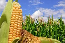 La agroindustria generó divisas por u$s14.340 millones en el primer semestre de este año.