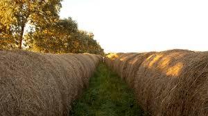 Primera exportación de alfalfa desde Córdoba a Dubái.