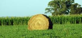 Qatar dio el visto bueno para la calidad y San Luis se prepara para exportar 15 mil tn de alfalfa