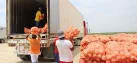 Rige la certificación de la cebolla de origen para exportación